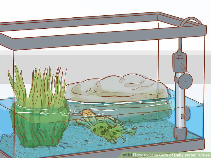 Aquarium clipart turtle tank, Aquarium turtle tank.