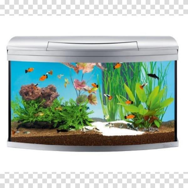 My Aquarium Tetra Siamese fighting fish, fish transparent.