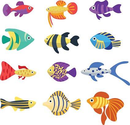 Set of aquarium fish. Cute cartoon colorful different fish.