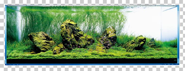 Aquariums Aquascaping Aqua Design Amano Rock, lush tree PNG.