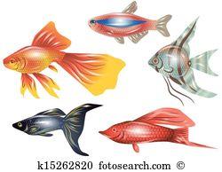 Aquarium fish Clipart Vector Graphics. 10,782 aquarium fish EPS.