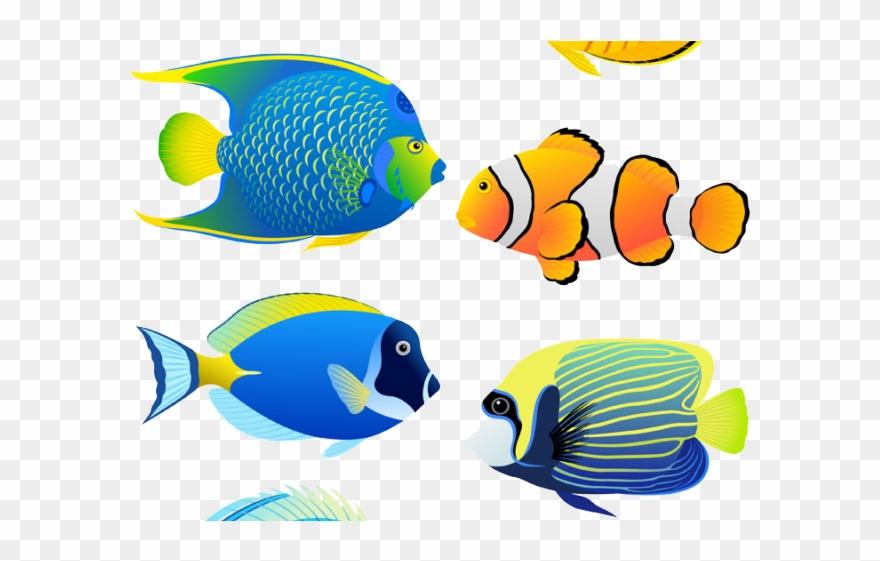 Angelfish Clipart Aquarium Fish.