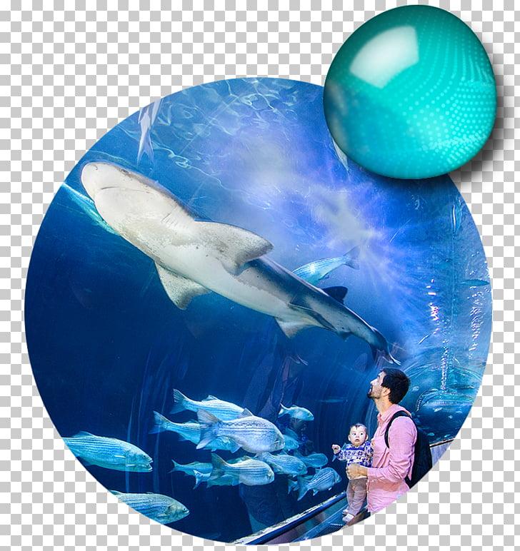 Aquarium of the Bay Pier 39 San Francisco Bay Aquarium of.