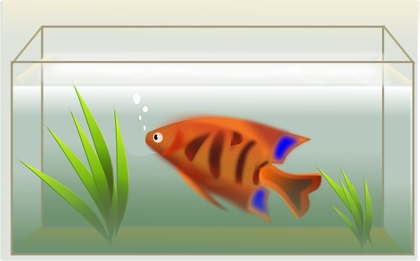 Fish Tank clip art Free vector in Open office drawing svg.