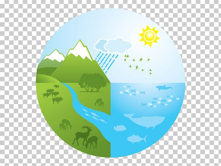 Aquatic Ecosystem Logo Drawing PNG, Clipart, Aqua, Aquatic.