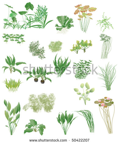 Aquatic Plants Stock Photos, Royalty.