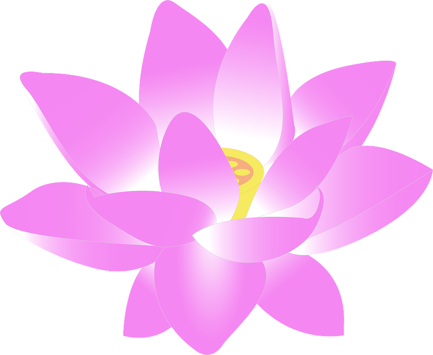 Free photo Water Lily Bloom Lily Lotus Aquatic Flower.