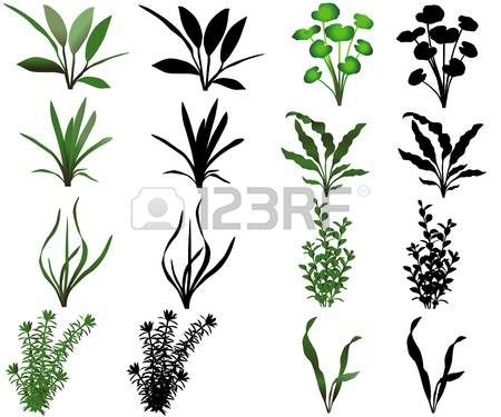 3,748 Aquatic Plant Stock Vector Illustration And Royalty Free.