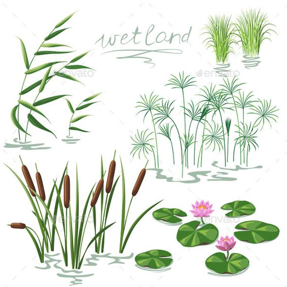 Wetland Plants Set.