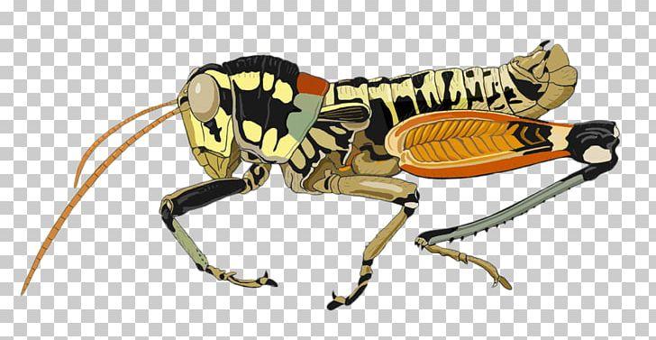 Aquatic Insect Xingu River Grasshopper PNG, Clipart, Animal.