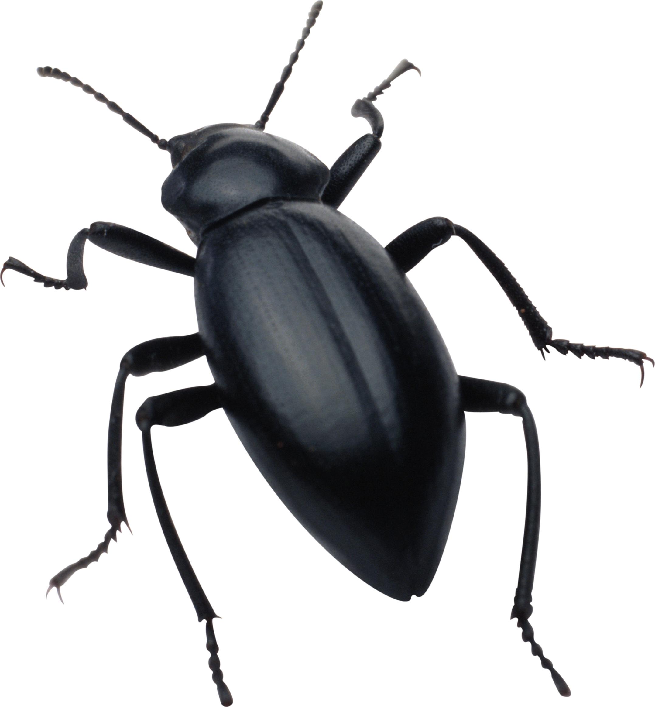 Mosquito clipart aquatic insect, Mosquito aquatic insect.