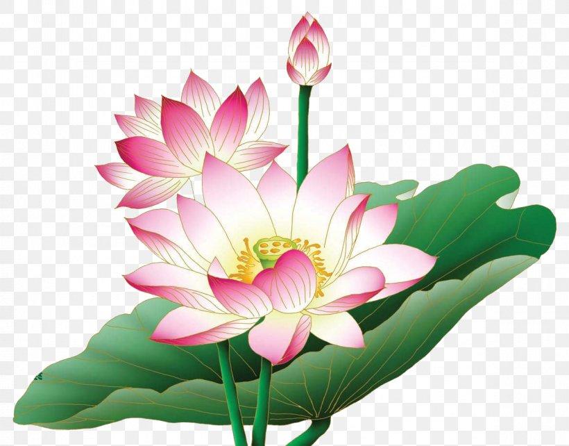 Nelumbo Nucifera Egyptian Lotus Flower Clip Art, PNG.