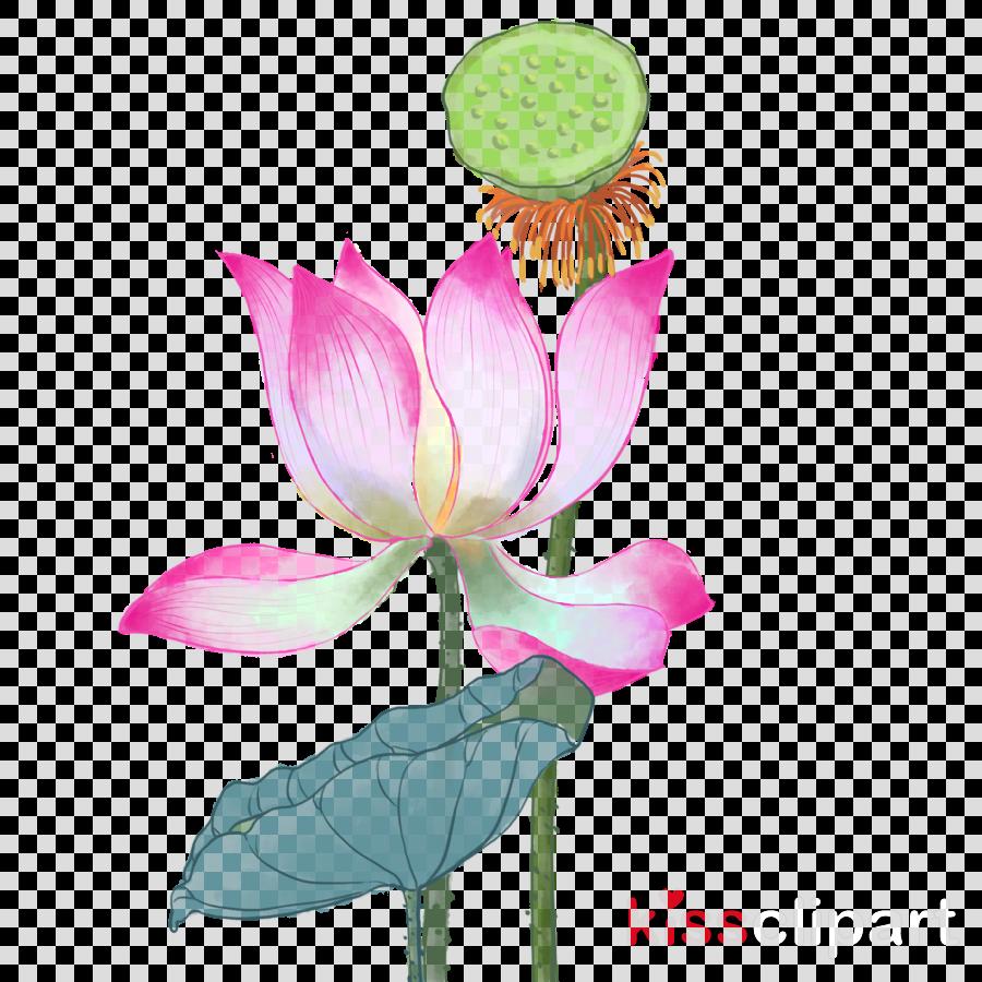 Lotus clipart.