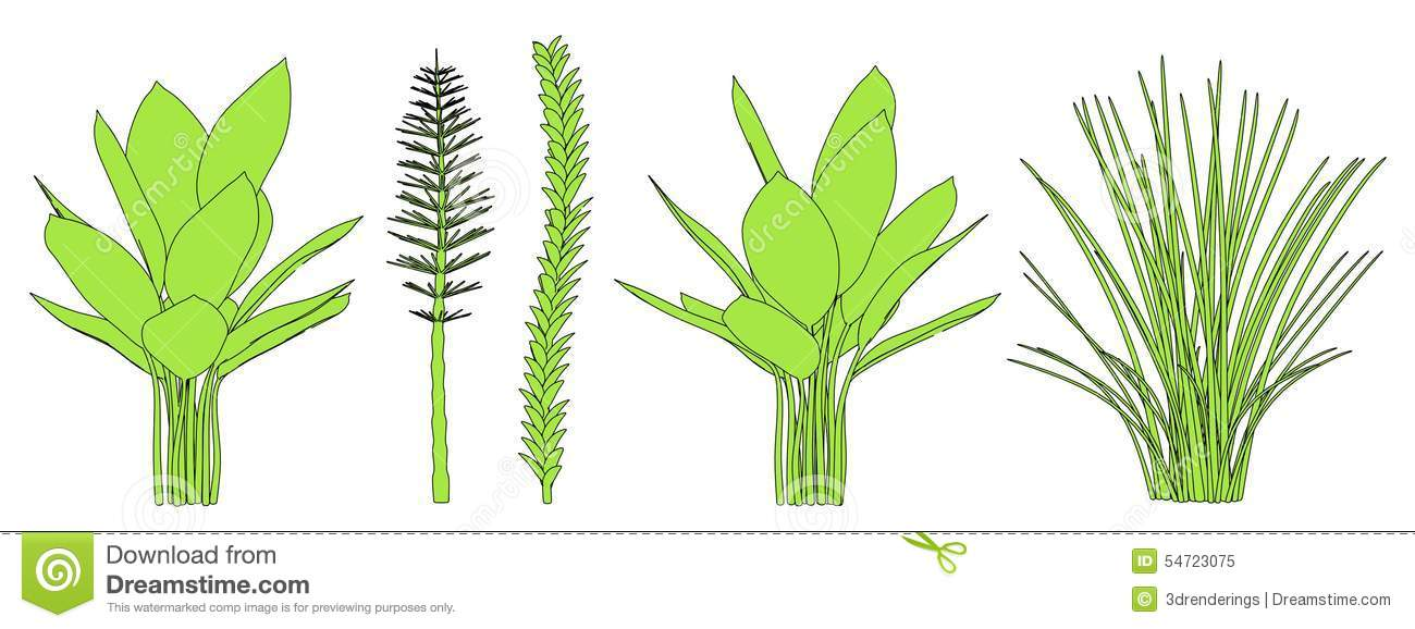 Image Of Aquatic Plants Stock Illustration.