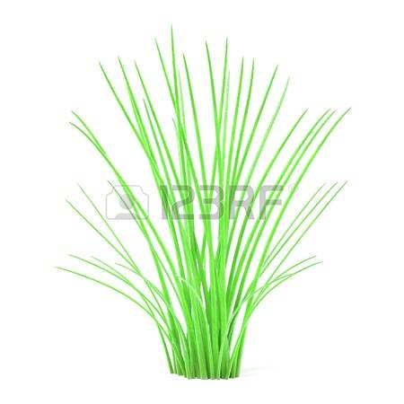 3,582 Aquatic Plant Stock Vector Illustration And Royalty Free.