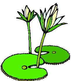 Plants that live in water clipart.