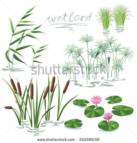 Aquatic plants free vectors free vector download (3,881 Free.