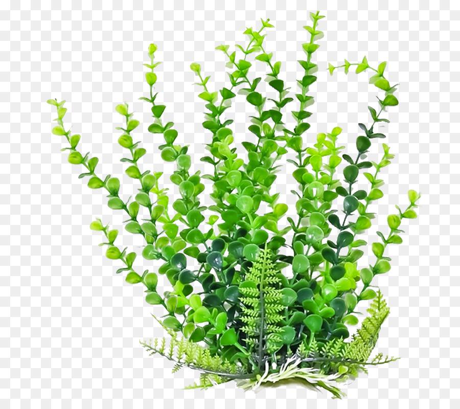Fern Leaf png download.