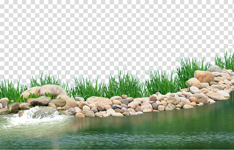 Gray rocks beside body of water, Pond Aquatic plant Lake, Lake.