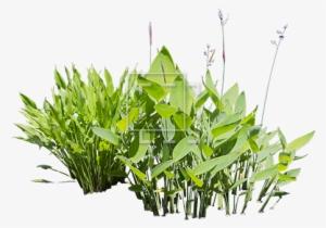 Aquatic Plants PNG & Download Transparent Aquatic Plants PNG Images.