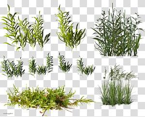 Concept map Plant cell Plant physiology, aquarium plants transparent.