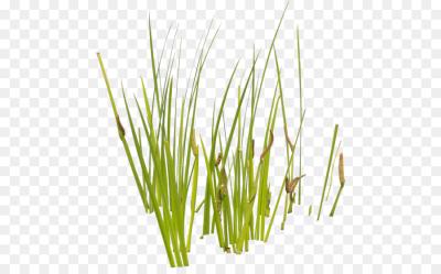 Plants PNG.