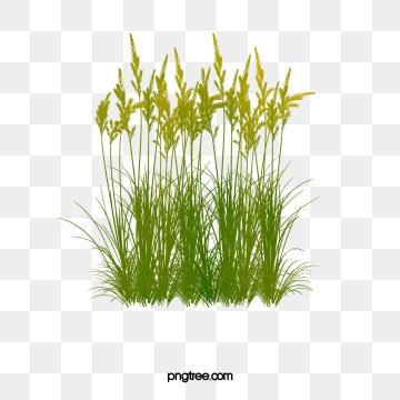 Aquatic Plants PNG Images.