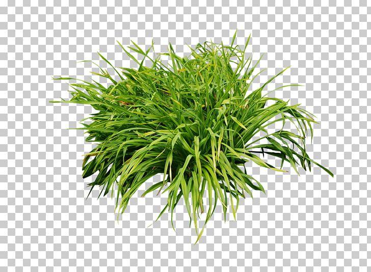 Aquarium Aquatic Plants Leaf Shrub PNG, Clipart, Algae, Aquarium.