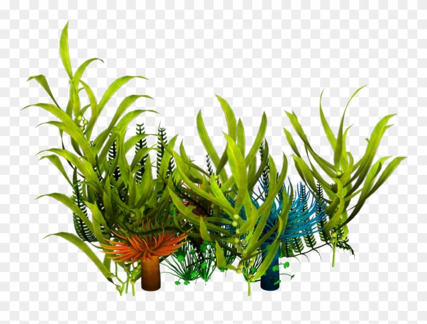 Underwater Aquatic Plants Seaweed Clip Art.