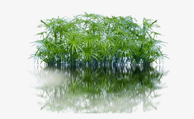 Aquatic Plants, 3d Post, Garden Elements #71810.