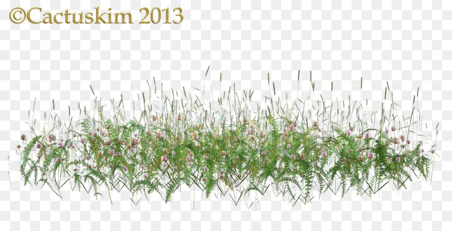 Grass Flowertransparent png image & clipart free download.