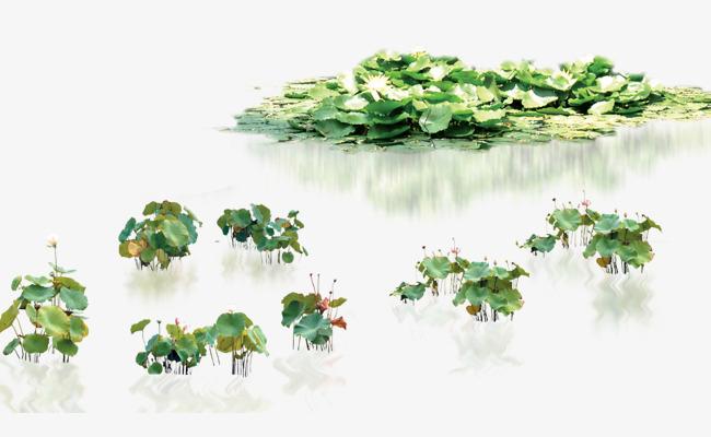 Lotus Plants, Water Shower, Aquatic, Plant PNG Transparent Clipart.