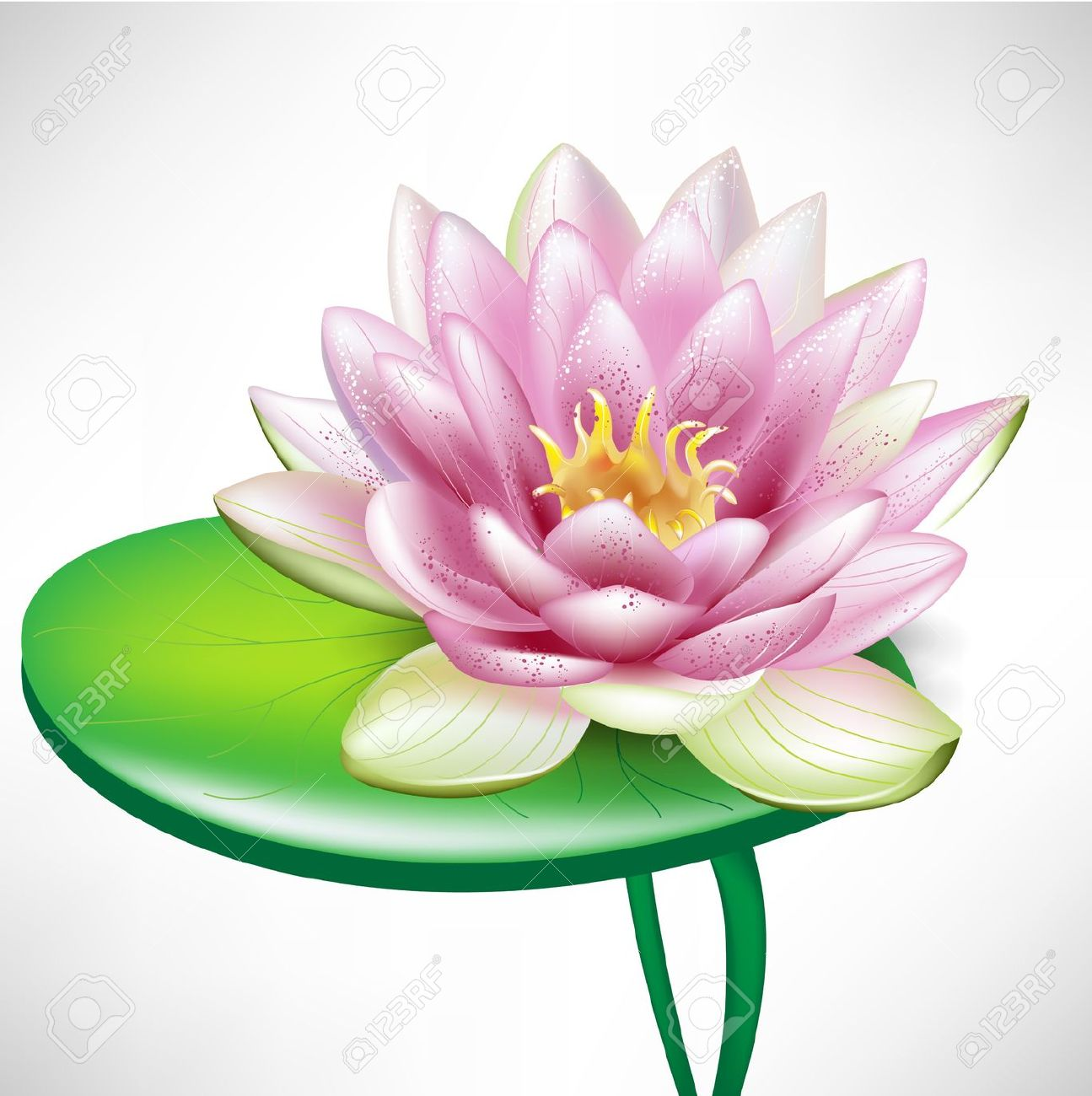 Single Beautiful Lotus Flowers On Leaf Royalty Free Cliparts.