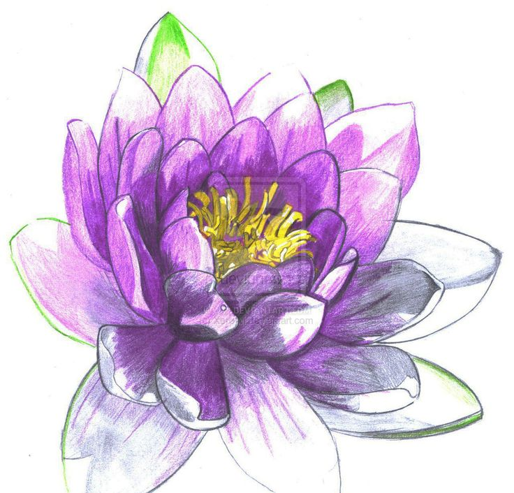 Purple Water Lilies Clipart Clipground