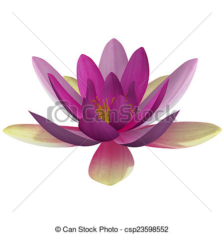 Stock Illustrations of Nymphaea is a genus of hardy and tender.