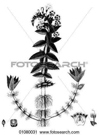 Clipart of Flora & Fauna.