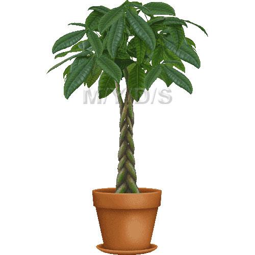 Provision Tree (Pachira aquatica) clipart / Free clip art.