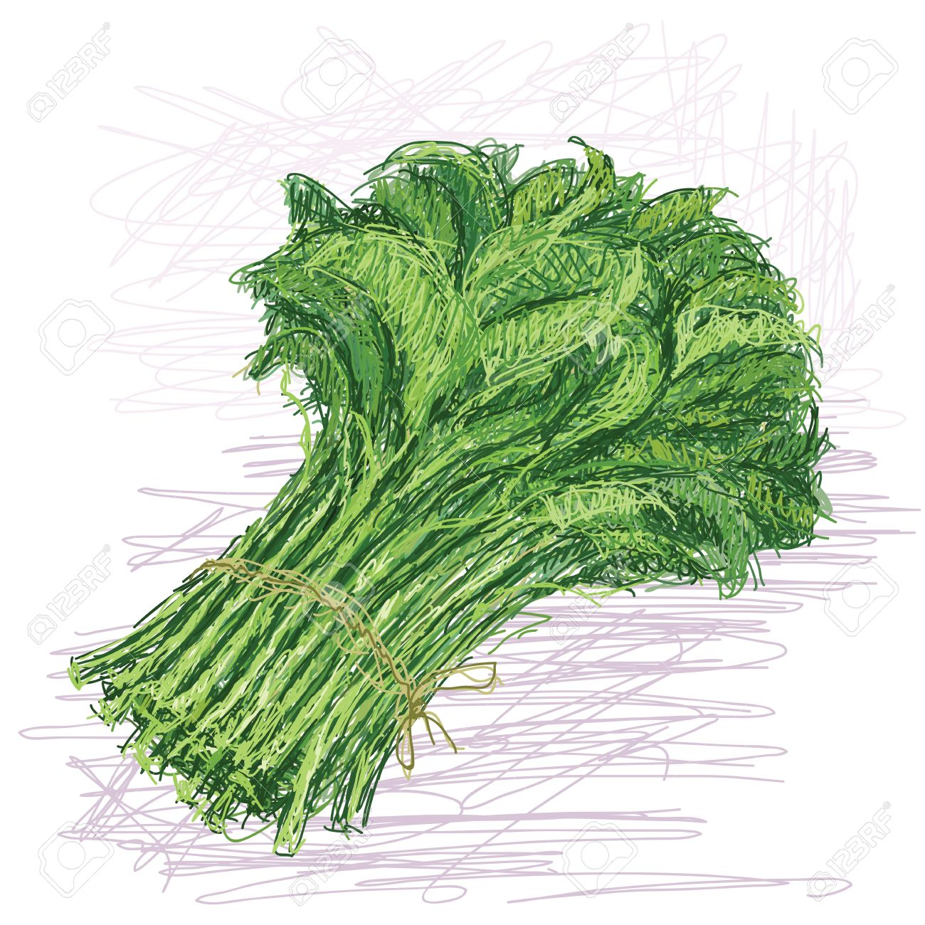Illustration Of Fresh Bunch Of Raw Kangkong Vegetable With.