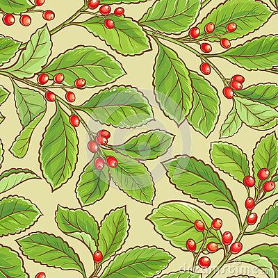 Aquifoliaceae Stock Illustrations.