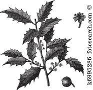 Aquifoliaceae Clip Art and Illustration. 9 aquifoliaceae clipart.