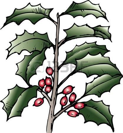 471 Ilex Aquifolium Stock Illustrations, Cliparts And Royalty Free.