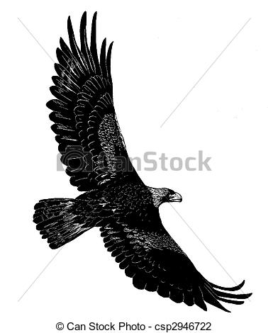 Aquila Illustrations and Clip Art. 82 Aquila royalty free.