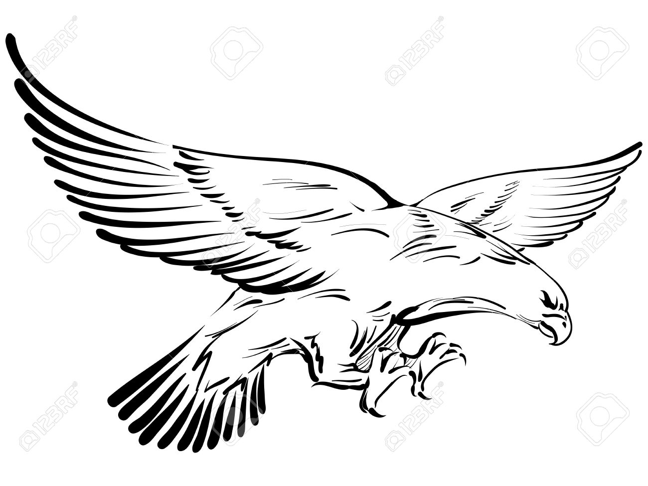 Doodle Aquila Clipart Royalty.