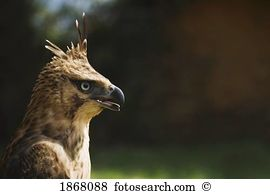 Raptor Stock Photo Images. 21,279 raptor royalty free images and.
