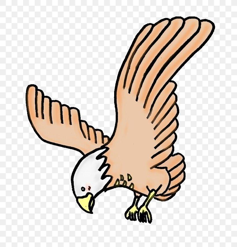 Hawk Eagle Clip Art Illustration Aquila, PNG, 800x856px.