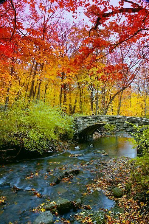 Autumn in Corvallis, #Oregon.
