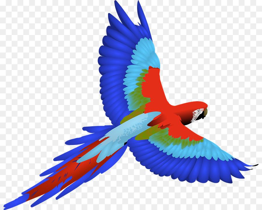Papagei Vogel Ara clipart.