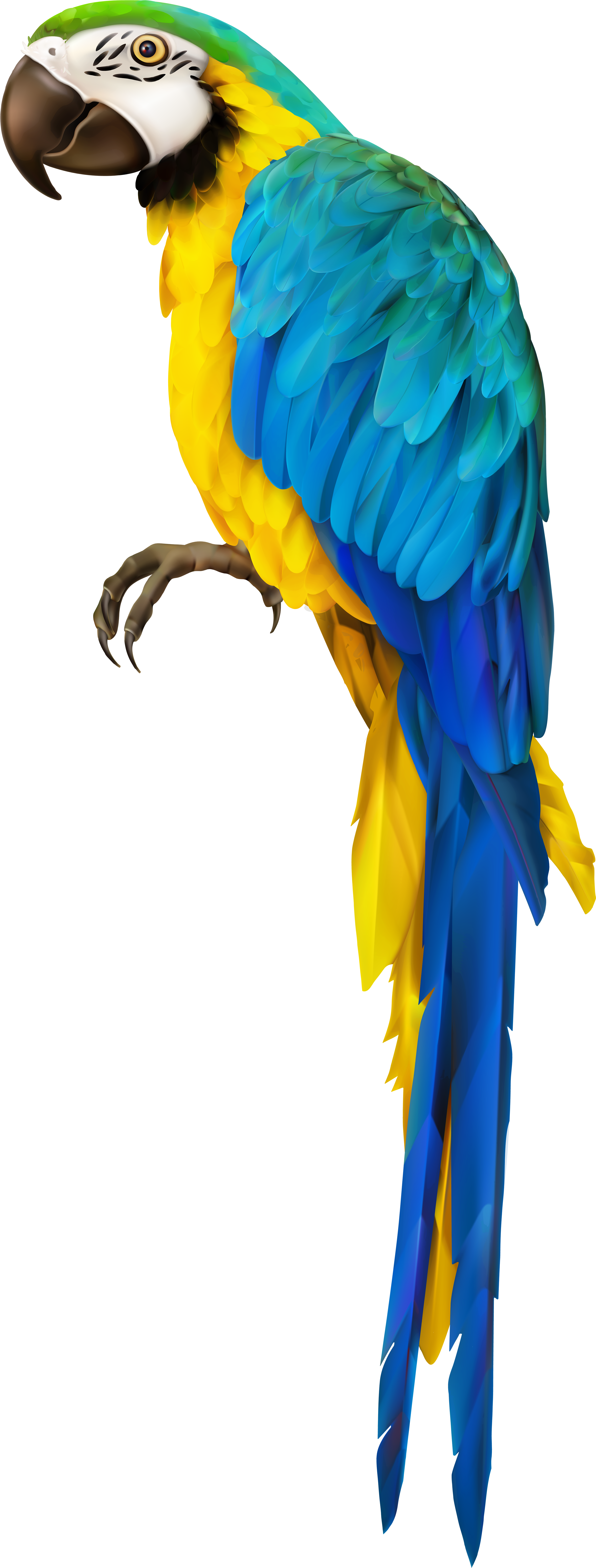 Ara Parrot Clipart.