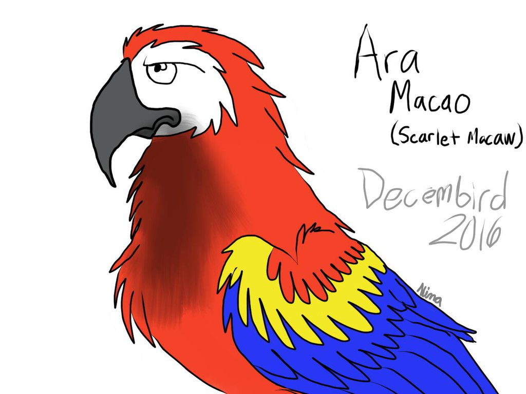 Ara Macao Decembird by GreenWingSpino32 on DeviantArt.