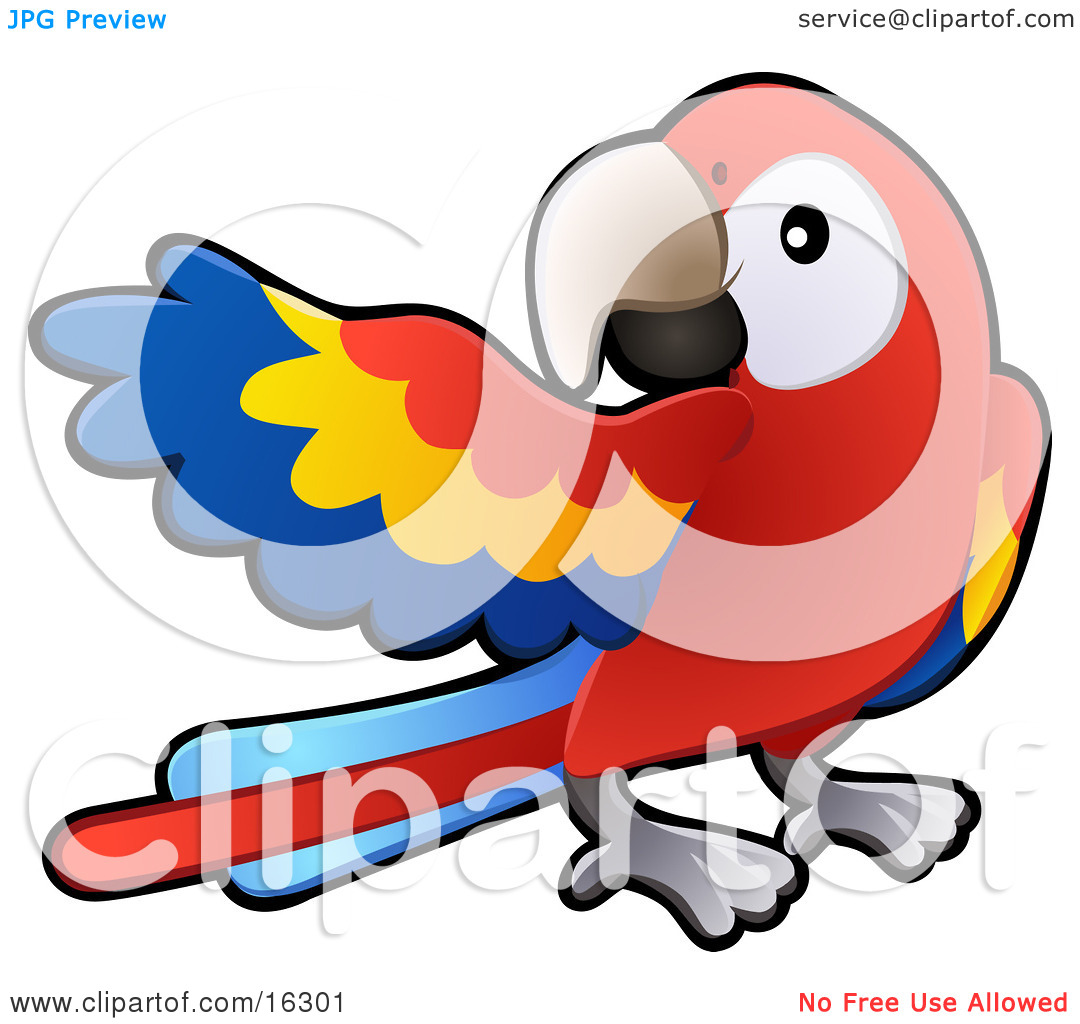 Red, Yellow And Blue Scarlet Macaw Parrot Bird (Ara Macao) With A.